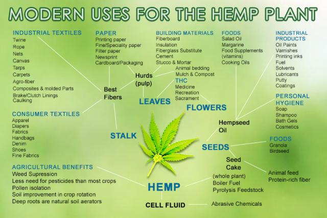 marijuana-usage-and-its-benefits